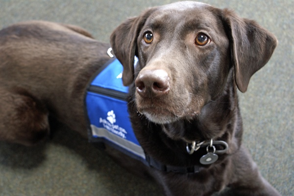NEW LEGAL ALERT: Service Animals at the Physician's Office (member login)